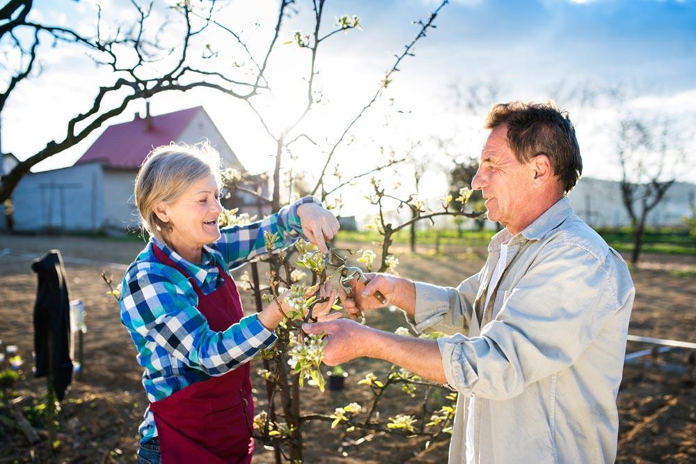 Как определить на яблоне плодовые почки