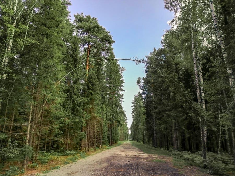 Природный парк Заповедный лес