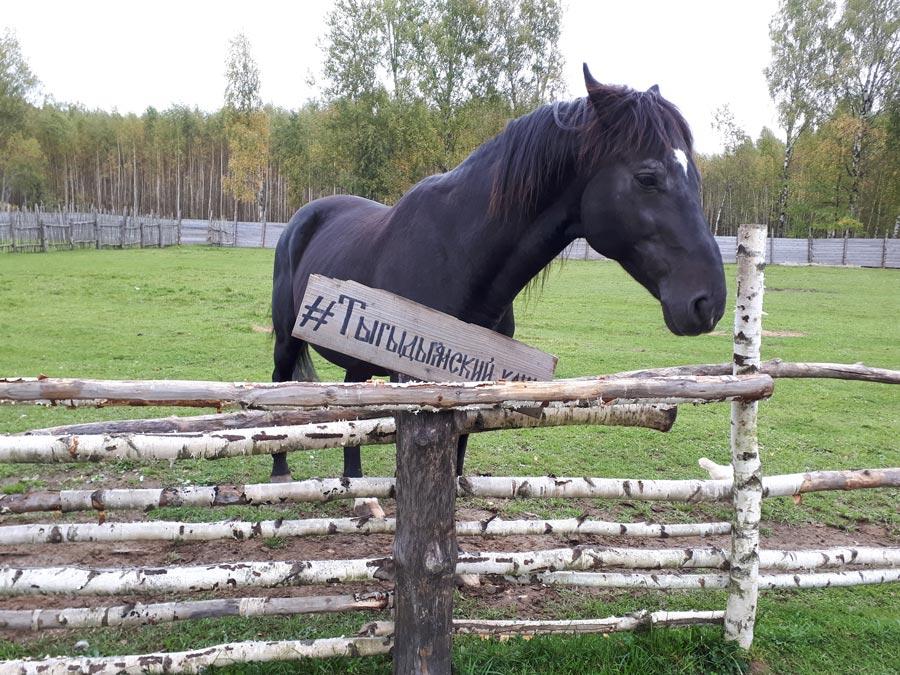 Тыгыдымский конь Паша