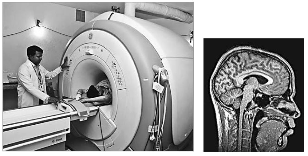 нейробиология— наука омозге