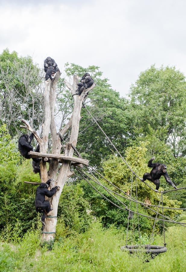 Лейпциг зоопарк