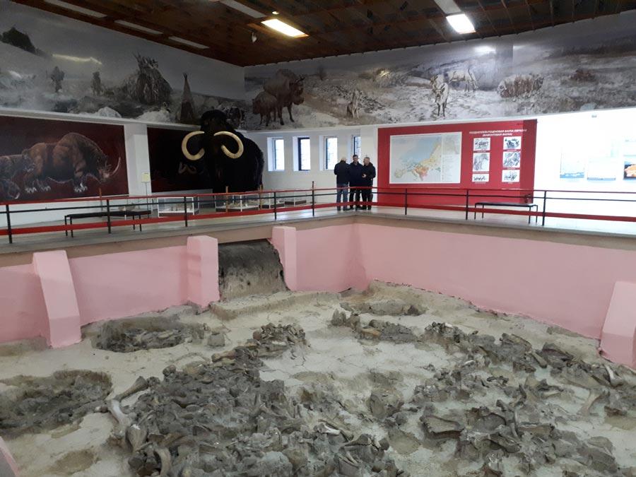 Археологический музей Костенки