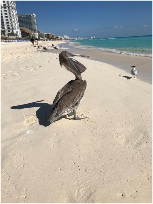Канкун: как добраться изаэропорта?
