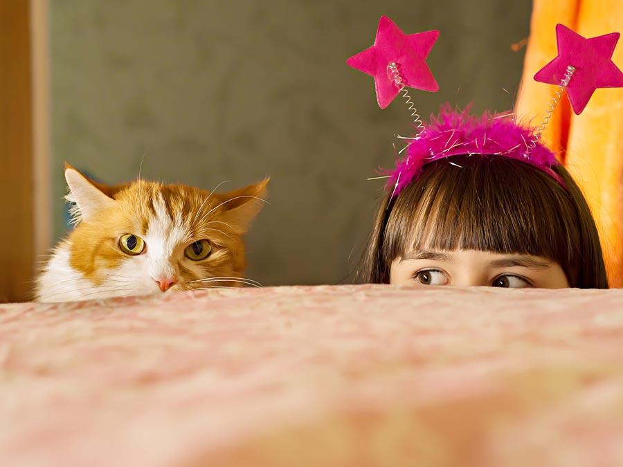 Купить котёнка для ребёнка