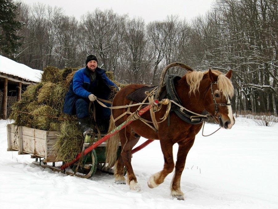 Лошади в Ясной поляне