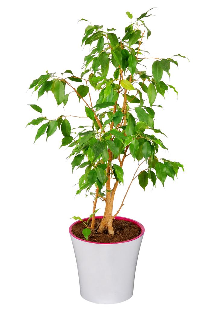 Расстановка комнатных растений по фэн-шуй