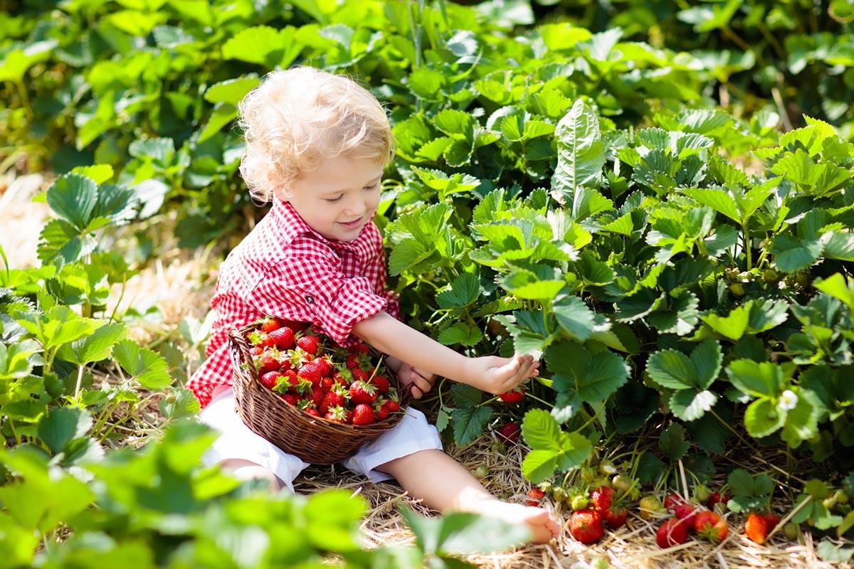 какие ягоды можно ребенку