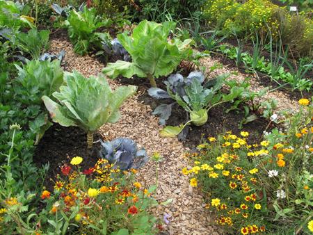 Грядки на дачном участке. Как вырастить свой первый урожай