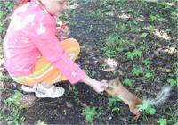Бельчонок, которого мы встретили в парке на Елагином острове, совсем не боится людей и даже ест с руки