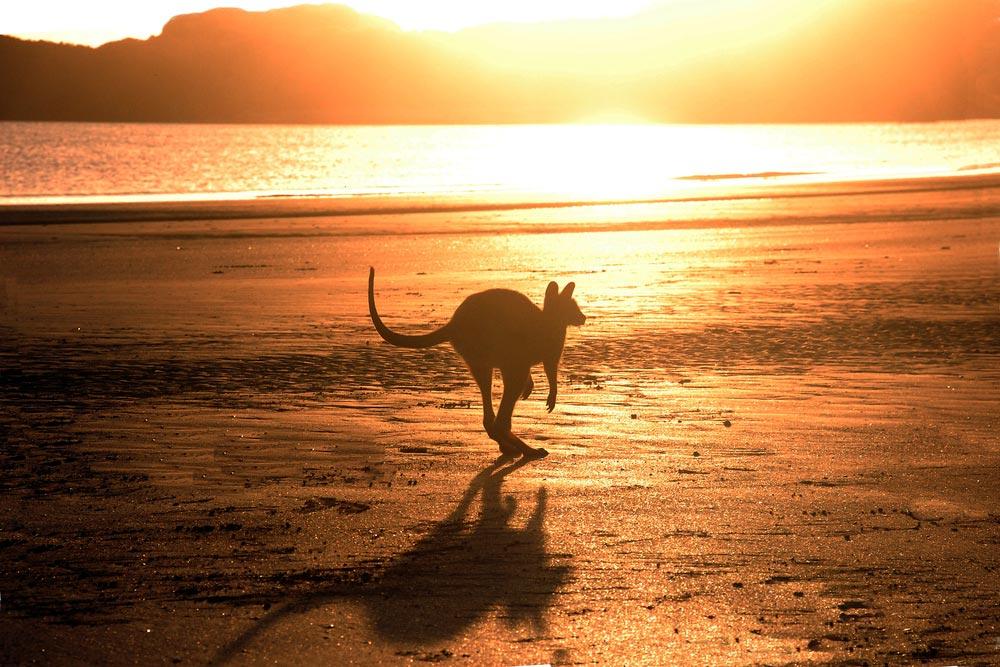 Австралия — самый маленький материк
