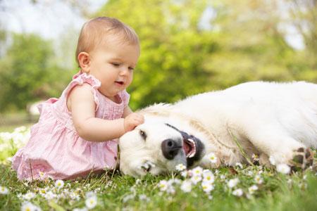 Новорожденный и домашние животные