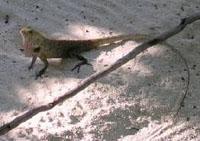 Какие животные водятся на Мальдивах