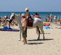 Там же, лошадь по кличке '100 рублей'