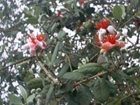 растительность в Гагре