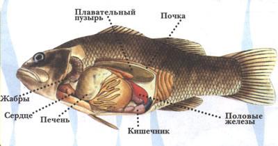 Где находится рыбка
