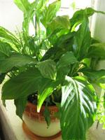 Серьезно о комнатных растениях