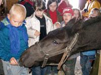 Дети из приюта 'Надежда' съездили в конный клуб 'Полевица'