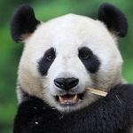10 лучших зоопарков и океанариумов мира