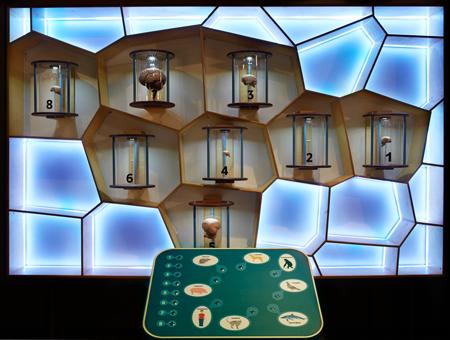 Розыгрыш билетов в музей 'Живые системы'