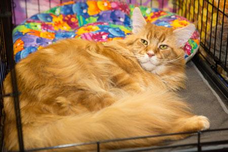 Розыгрыш билетов на выставку кошек «Кэтсбург-2017»