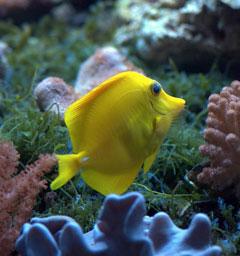 'Океанариум' на Чистых Прудах