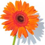 Знаете ли вы садовые цветы?