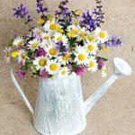 Знаете ли вы полевые цветы?